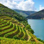Wino Porto – gdzie można spróbować?
