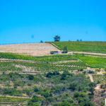 Dolina Douro samochodem + co warto zobaczyć po drodze i droga N-222 i 108