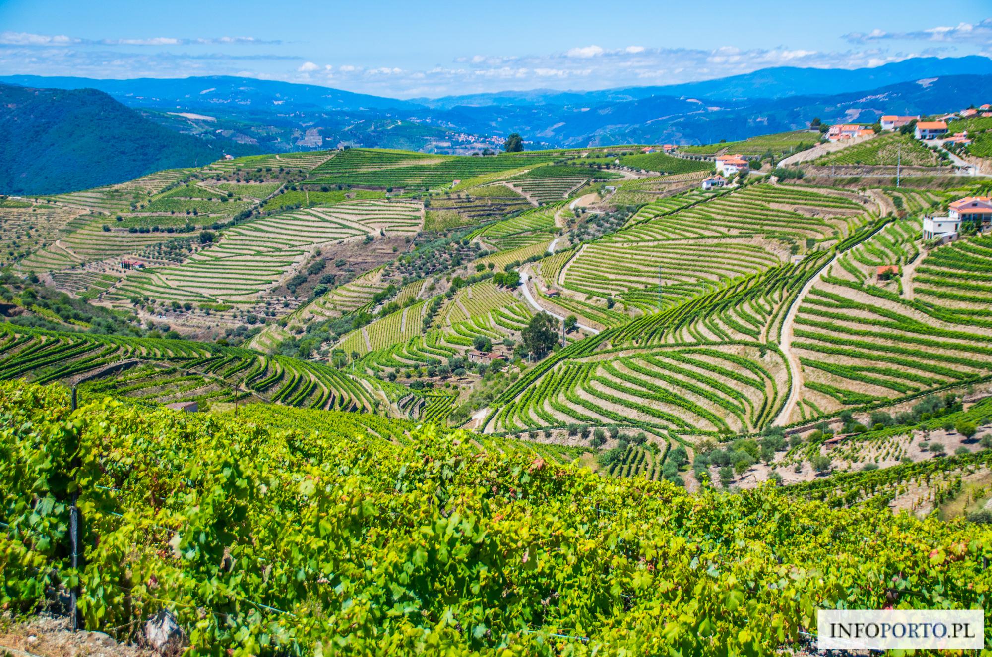 Polecane winnice w Dolinie Douro w Portugalii Portugalia quintas najlepsze winnice i producenci win zwiedzanie winic opis przewodnik zestawienie lista którą winnice wybrać TOP THE BEST Winnic Douro
