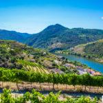 Dolina Douro pociągiem, autobusem, rowerem lub pieszo + rejsy [Poradnik]