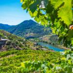 Polecane winnice w dolinie rzeki Douro w Portugalii