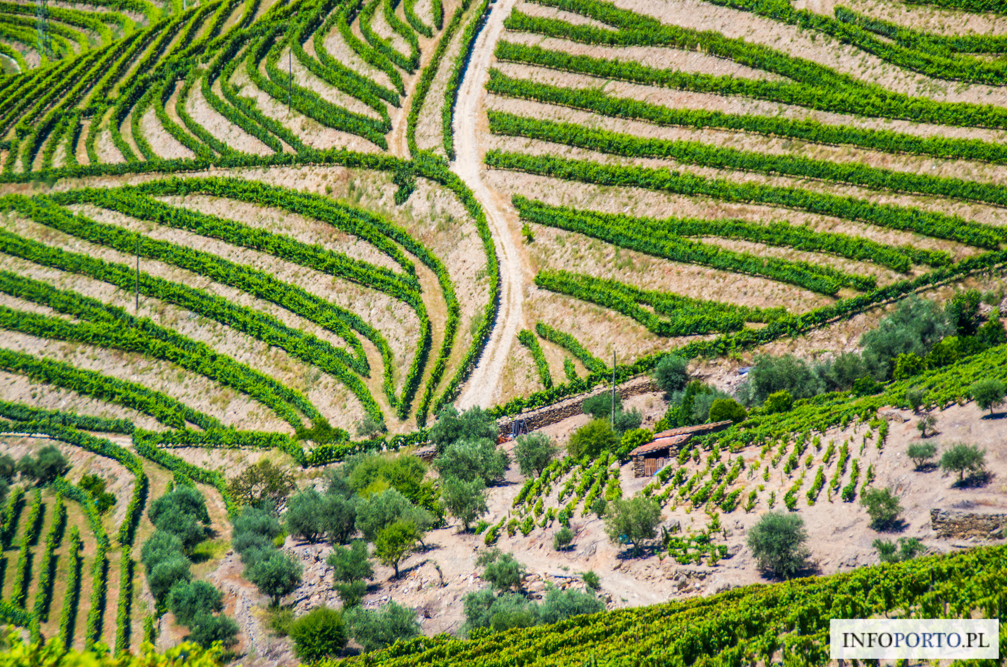 Winnice Dolina Douro Portugalia winnica polecane i najlepsze winnice w duero quintas przewodnik top zestawienie lista którą winnice wybrać dojazd opis zwiedzanie