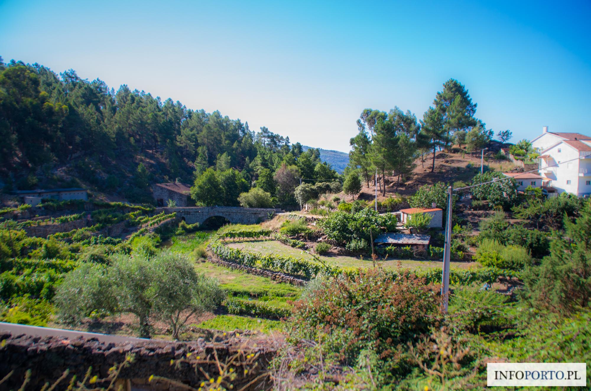 Dolina rzeki Douro zdjęcia fotografia photos foto zdjecia fotografia photograpfy galeria zdjęć opis informacje praktyczne zwiedzanie mapa